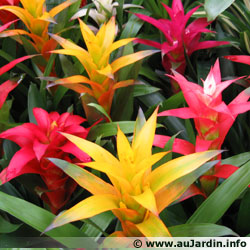 Entretien Plantes D Interieur Le Blog De La Fleuriste
