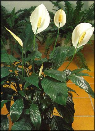 Entretien plantes d\'intérieur · le blog de la fleuriste